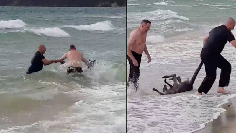 Police Officers Save A Kangaroo From Drowning In The Sea