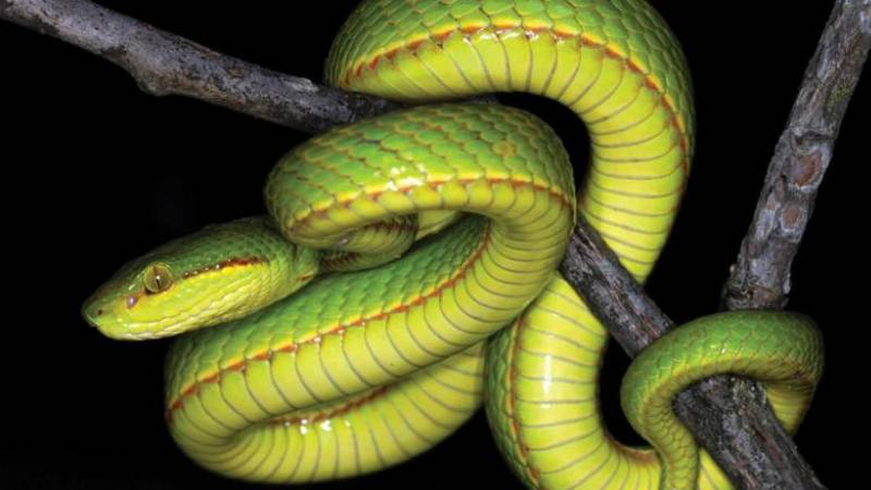 Scientists Discover New Species Of Snake And Name It After Salazar Slytherin