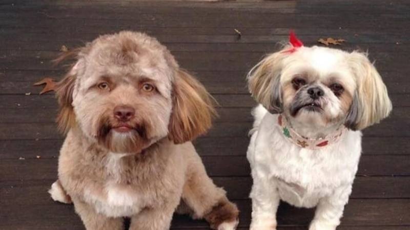 This Dog's Scarily Human Face Is Simultaneously Hilarious, Amazing And Weird As Hell