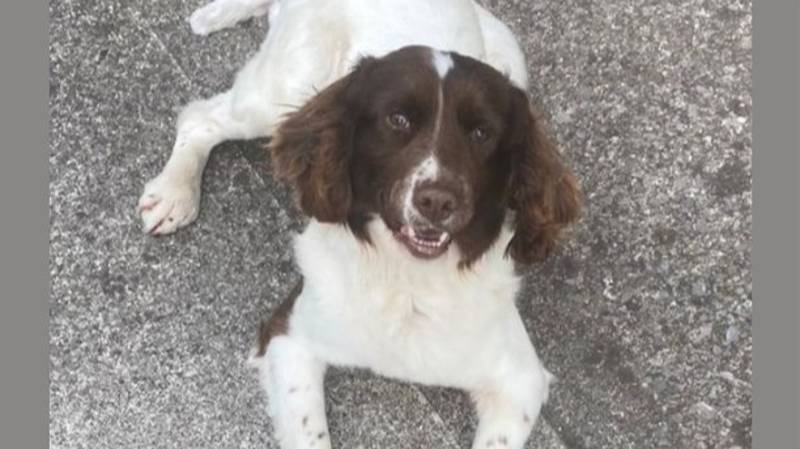 Dog Stolen In Cork Rescued From The UK And Returned To Owner After Months