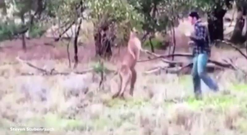 Fearless Aussie Alpha Male Punches A Kangaroo To Protect His Dog