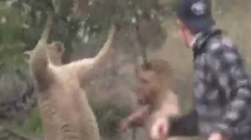 Some Guy Has Edited Conor McGregor Into 'That' Kangaroo Fight