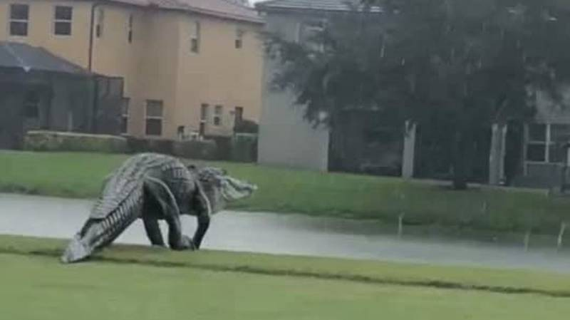 Monster Gator Spotted Walking Across Florida Golf Course