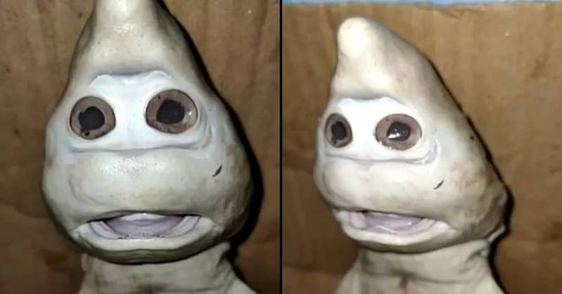 Fisherman Baffled By Baby Shark With Strange 'Human Face'