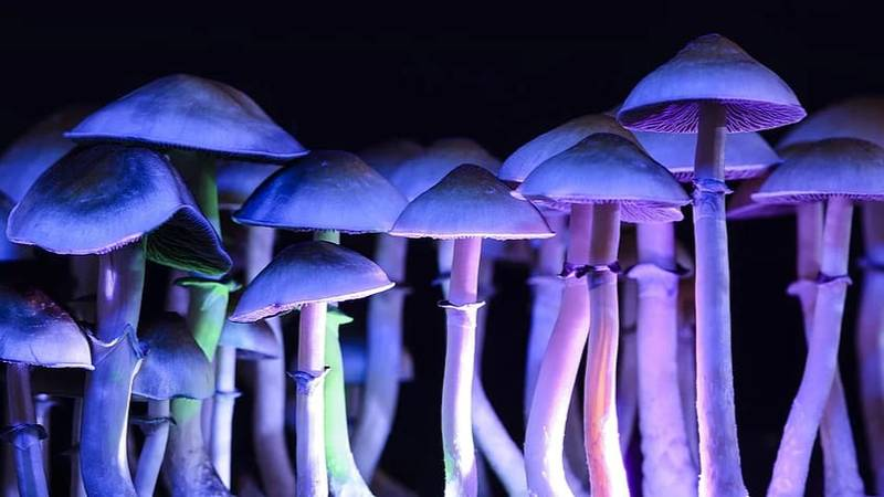 First Official Steps Made To Reschedule Magic Mushrooms And MDMA In Australia
