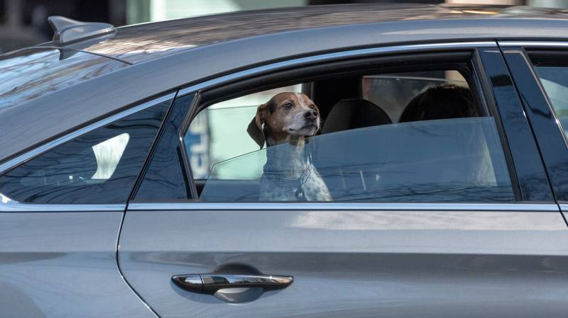 Uber Australia Will Finally Allow You To Bring Your Pet Along For The Ride