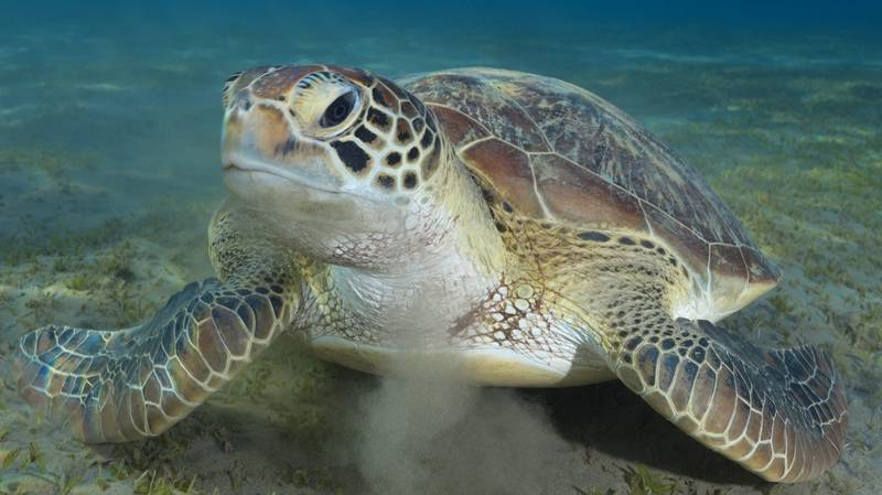 Vet Pulls 30cm-Long Plastic Bag Out Of Sea Turtle