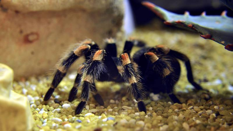 If You're Scared Of Spiders Then You Could Blame Your Parents