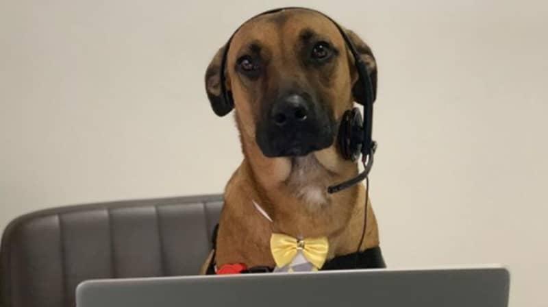 Stray Dog Who Kept Visiting Car Dealership Gets Adopted And Given A Job