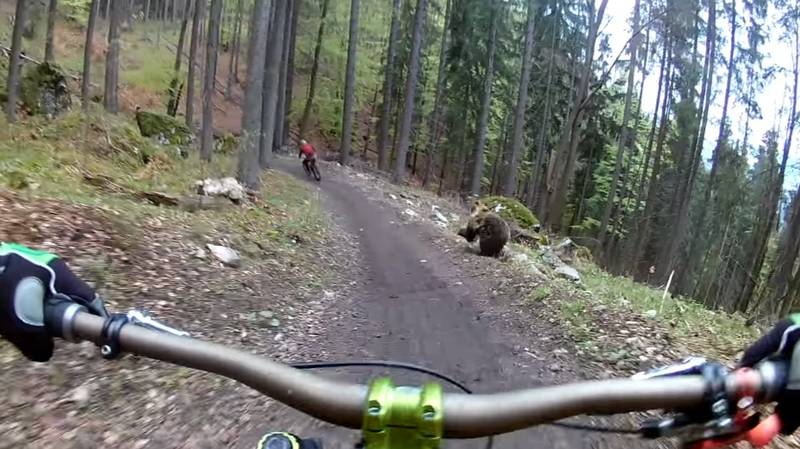 Mountain Bikers Catch Footage Of Bear Charging Them During Ride