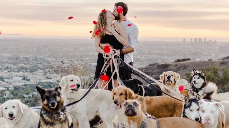 LAD Proposes To Girlfriend With 16 Dogs In Attendance