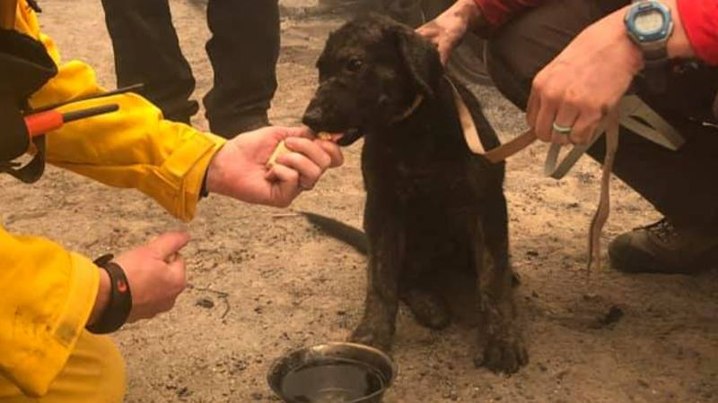Puppy Found Alive After Being Buried Under Ash And Rubble In Huge Wildfire