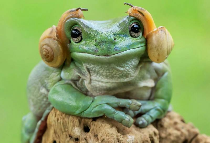 'Princess Leia Frog' Has Been Given The Photoshop Treatment