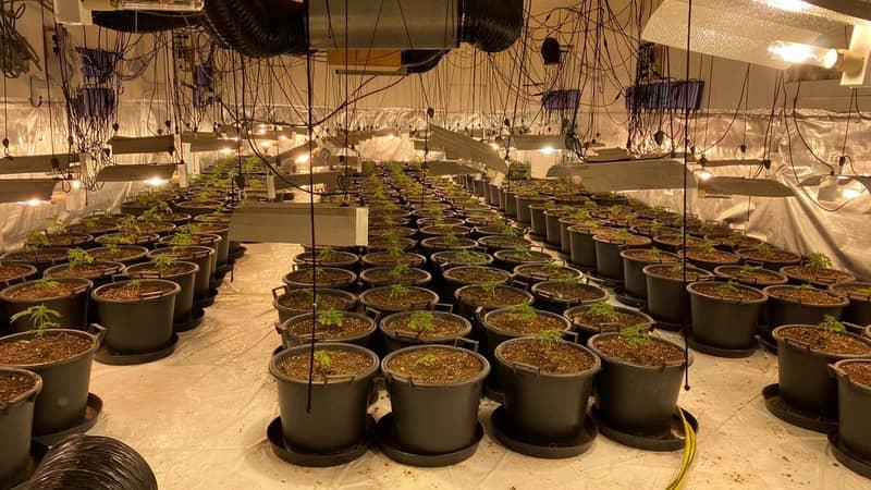 Massive Cannabis Farm Worth £1 Millon Uncovered Inside Former Nightclub