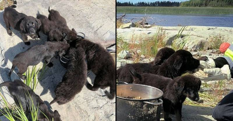 Seven Abandoned Puppies Rescued From Uninhabited Island After They Are Heard Crying