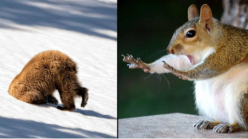 The Finalists For This Year's Comedy Wildlife Photography Awards Are Great