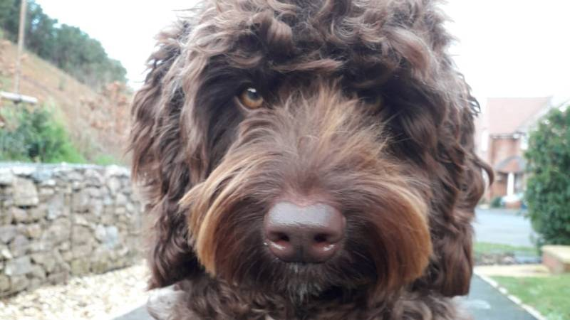 Digby The Dog Helps Save Life Of Woman Thinking About Jumping Off Bridge