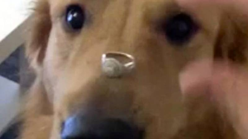 Woman's Attempt To Get Dog To Pose With Engagement Ring Goes Wrong