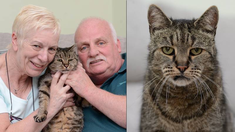 The World's Oldest Cat Has Sadly Passed Away