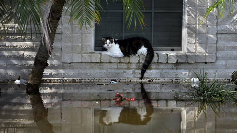 New Bill Will Make It Illegal To Abandon Your Pet In A Natural Disaster In Florida
