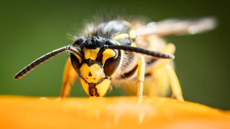Man Sets His House On Fire Trying To Get Rid Of Wasps' Nest