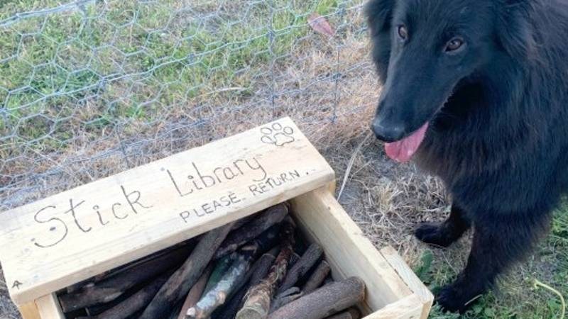 Man Makes 'Stick Library' For Dogs At Park In New Zealand