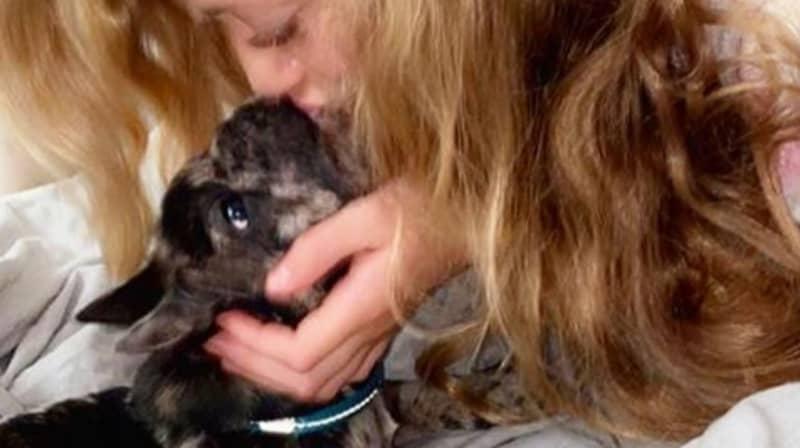 Katie Price's Daughter's New Puppy Has Died