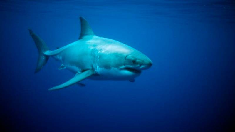Expert Claims There Is A Great White Shark 'Hunting' Off British Shores