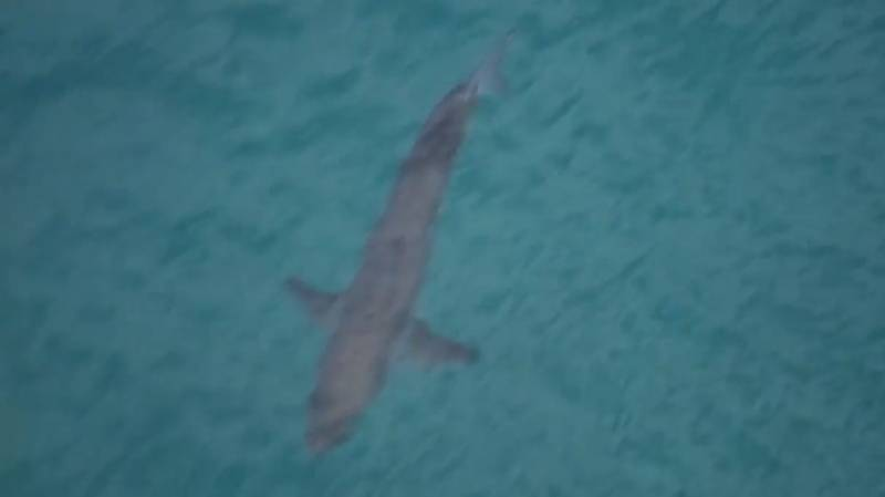Australian Surfer Killed After Being Mauled By A Great White Shark