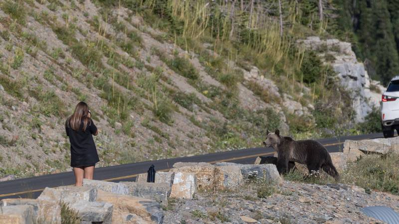 Woman Carries On Photographing Bear As It Moves Closer Towards Her
