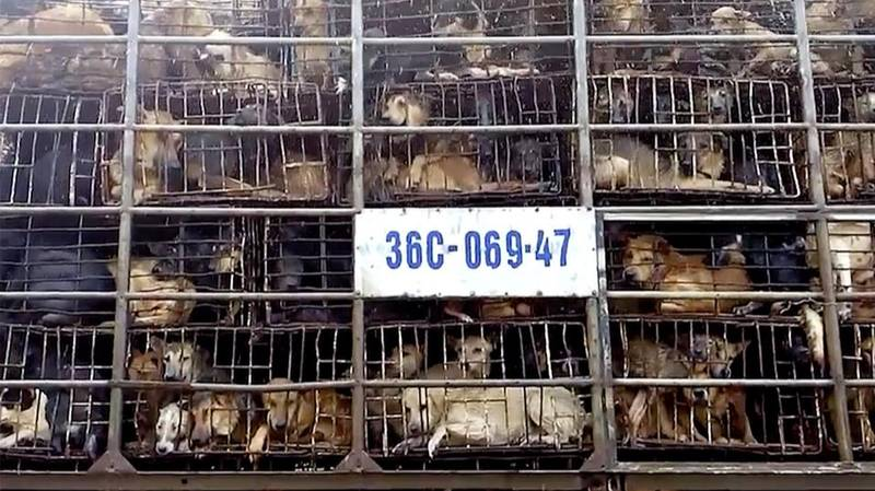 Shocking Footage Shows The Horrors Of Vietnam's Dog Meat Industry
