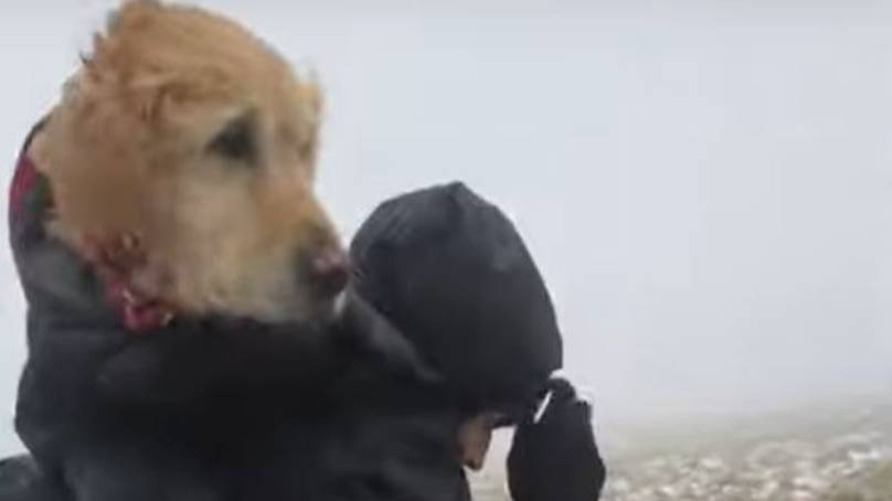Couple Who Rescued Missing Dog Reported To Police For Breaching Lockdown Rules
