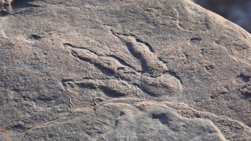 Dinosaur footprint found on Welsh beach with four-year-old girl